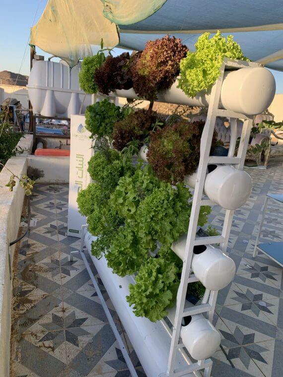 جميع النباتات المائية