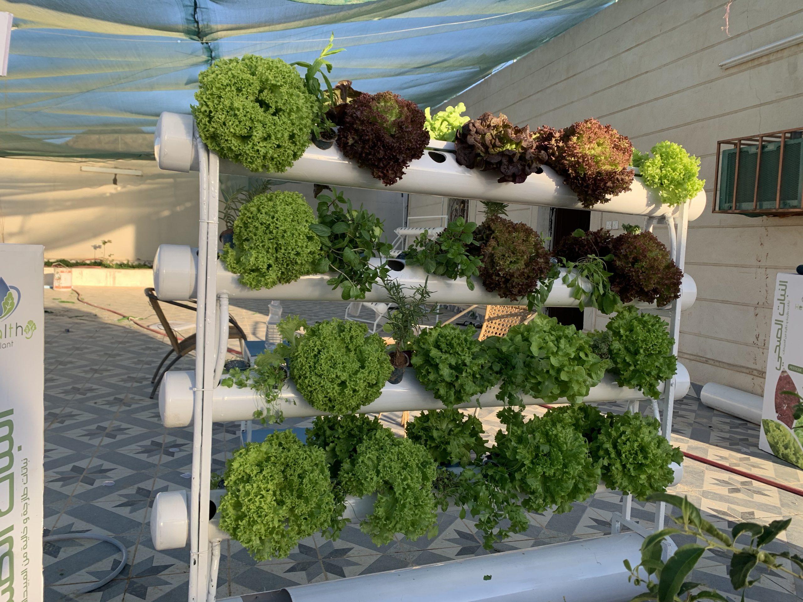 نظام منزلي للزراعة المائية للورقيات