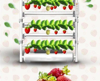 نظام الزراعة المائية لإنتاج الفراولة
