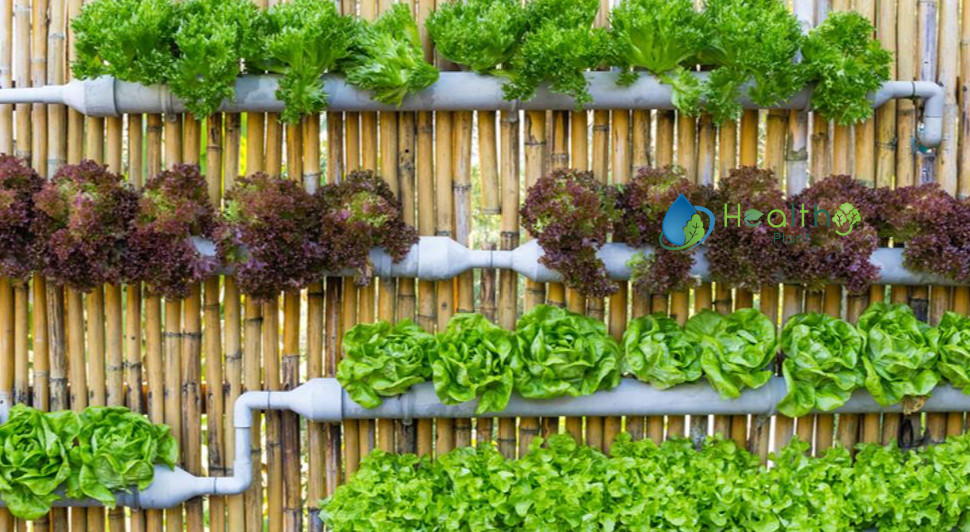 الزراعة-المائية-في-المنزل