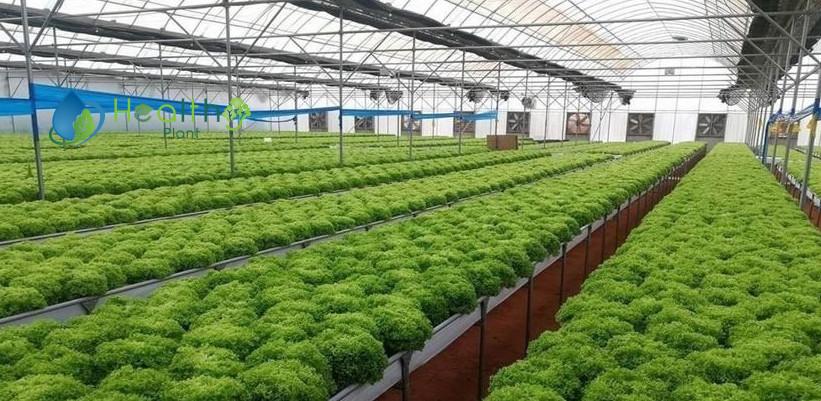 تكلفة الزراعة المائية في السعودية