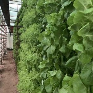طريقة الزراعة المائية