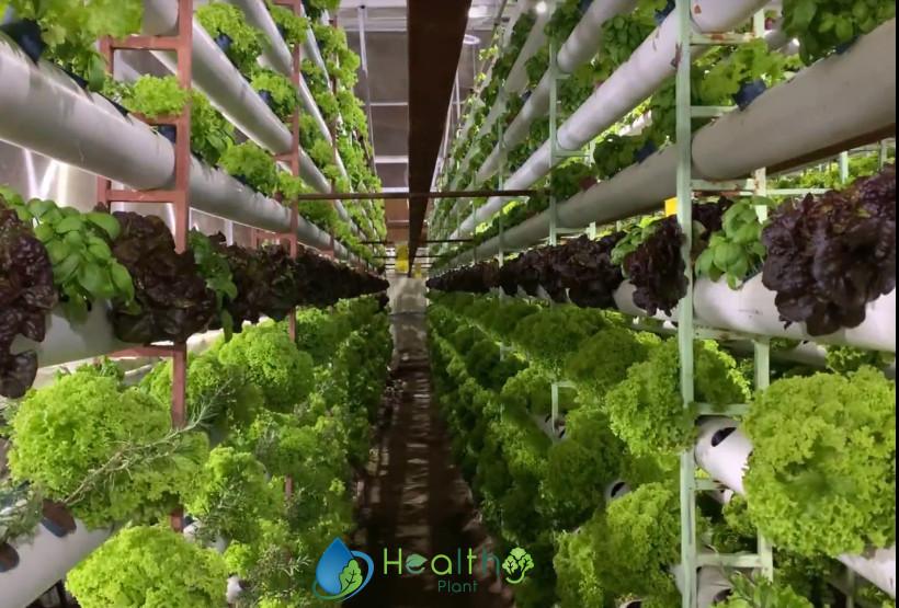 الزراعة المائية من الالف الى الياء