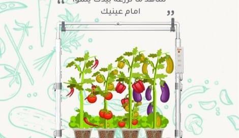 نظام الزراعة المائية للثمريات
