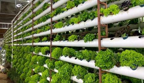 نظام زراعي