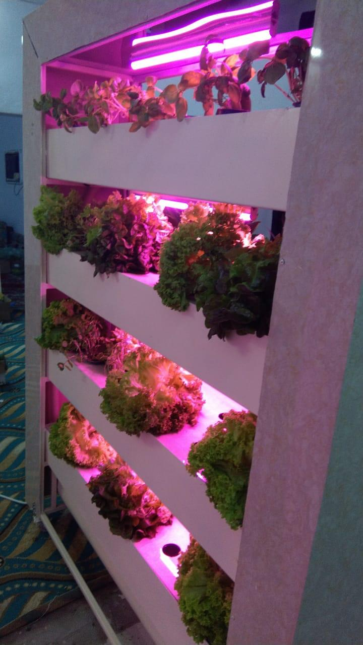 كيف تصنع نظام الزراعة المائية