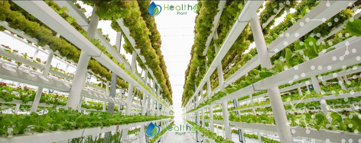 الزراعة العمودية في السعودية