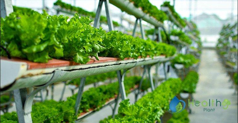 الزراعة المائية 2020