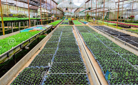 دراسة جدوي مشروع مشتل نباتات زينة وشتلات فاكهة pdf
