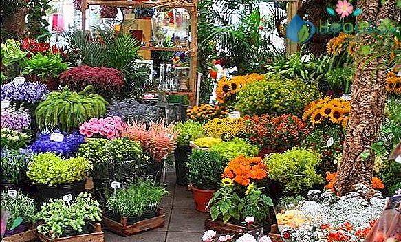 متجر نباتات في جدة