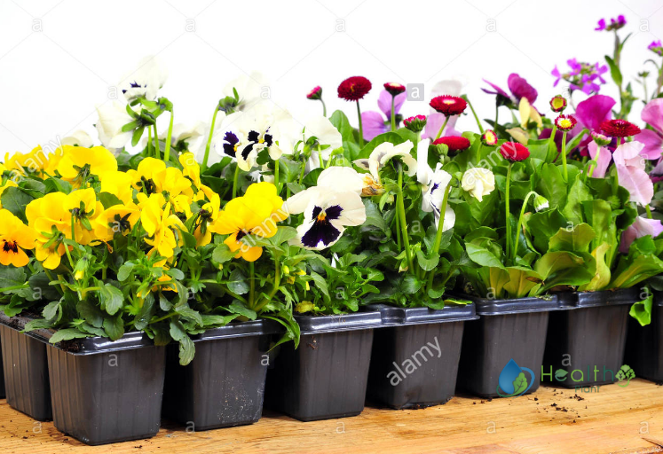 مشتل زهور