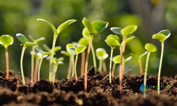 نباتات داخلية بالجملة